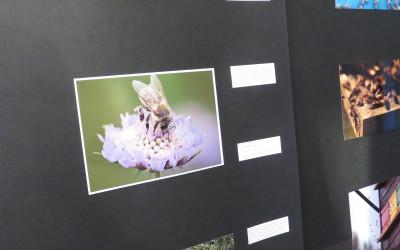 Zaključek mednarodnega natečaja S čebelo – za čebelo